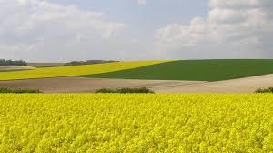 investissement terrains agricoles