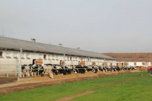 investissement vaches laitières